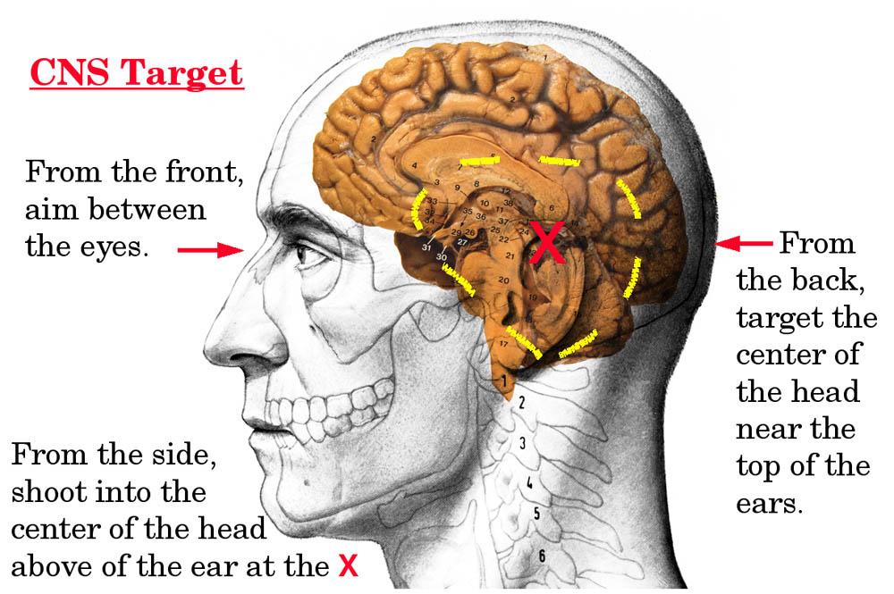 """Vista lateral de la cabeza humana, áreas """"sensibles"""". Redacción Espacio Armas."""