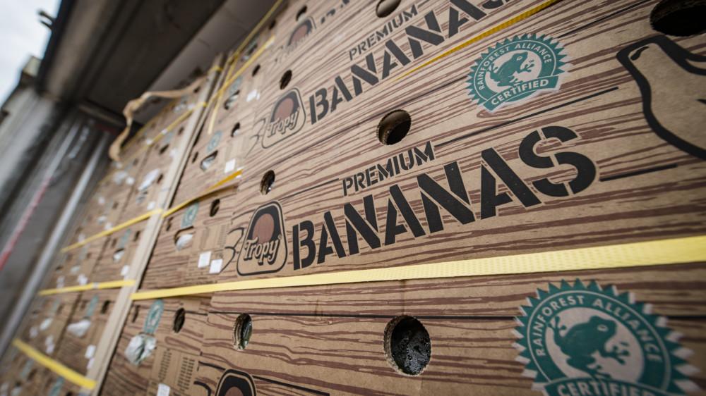 Cocaína oculta en cargamentos de fruta abastece el mercado europeo
